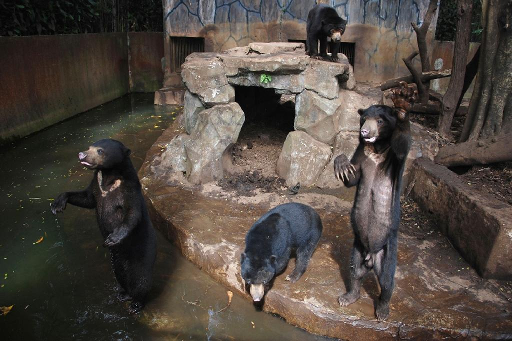 Anger at skeletal sun bears in Indonesian zoo