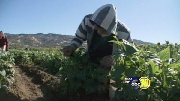 Growing support for undocumented workers seeking citizenship