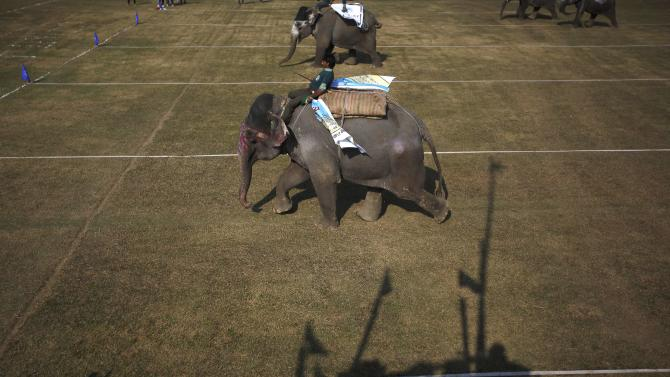 Elephants race towards the finishing line during an Elephant Festival event at Sauraha in Chitwan