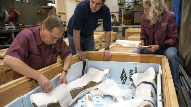 In this Tuesday, April 8, 2014 photo, released by Montana State University, Pat Leiggi, left, the Museum of the Rockies director of exhibitions and administrator of paleontology, Brian Baziak, center, preparator paleontology, and Carrie Ancell, right, senior preparator of paleontology, check the contents of a crate containing fossilized bones from a Tyrannosaurus rex in Bozeman, Mont. The specimen, known as the Wankel T. rex, is being prepared for shipment from Montana to Washington, where it will be on display in the Smithsonian National Museum of Natural History's new paleontology exhibit scheduled to open in 2019. (AP Photo/Montana State University, Sepp Jannotta)