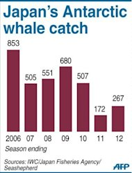 Graphic charting Japan's whale catch in the Antarctic 2006-2012. Commercial whaling is banned under an international treaty but Japan has since 1987 used a loophole allowing the marine mammals to be harpooned for scientific purposes.