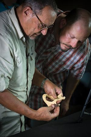 Professors Peter Schmidt (left) and John Hawks inspect …