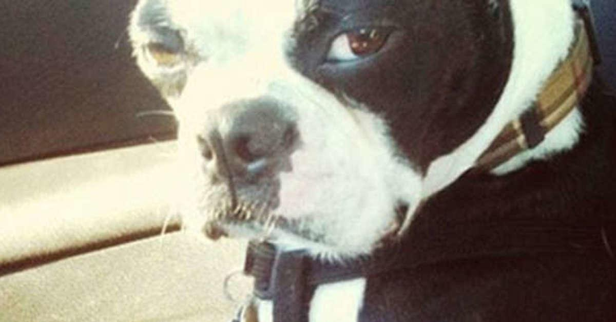 15 Animals That Are Judging Your Life Choices