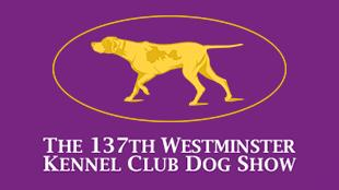 The 137th Westminster Kennel Club Dog Show 16x9 tile