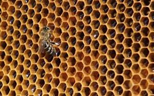 A bee sits on a honeycomb from a beehive at Vaclav Havel Airport in Prague