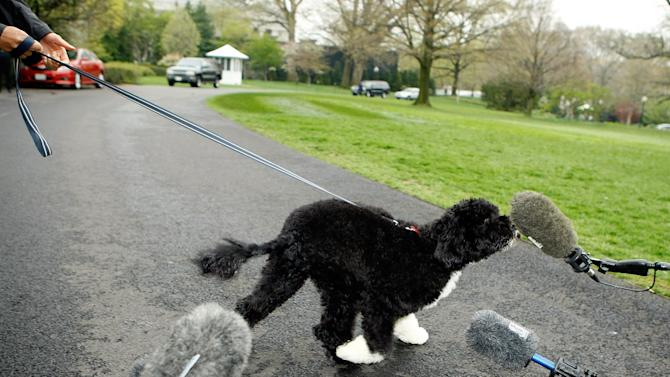 The White House Debuts The Obamas' New Dog Bo