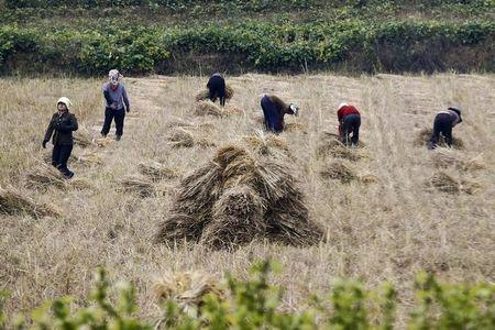 People work in a field just outside Pyongyang, North Korea
