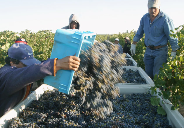FILE - In this Sept. 12, 2006 file photo, a worker dumps just-picked merlot grapes into a bin as Vicente Reyna, center, and Benjamin Torres supervise the loading of the grapes at the Andrews Horse Heaven ranch, near Paterson, Wash. Now that Washington voters have legalized marijuana, will an area recognized as one of the most productive agricultural regions in the world, celebrated for Washington apples, hops and wine grapes, become known as the vice belt? Not necessarily. (AP Photo/Yakima Herald-Republic, Gordon King, File)