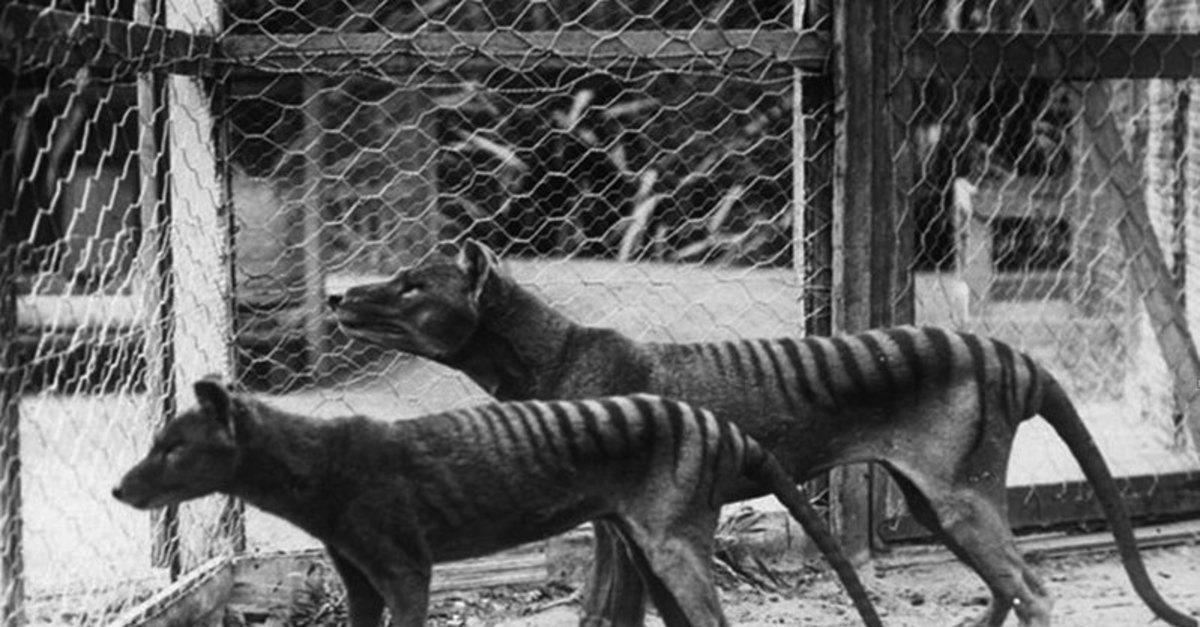 10 Extinct Animals Scientists Want to Revive