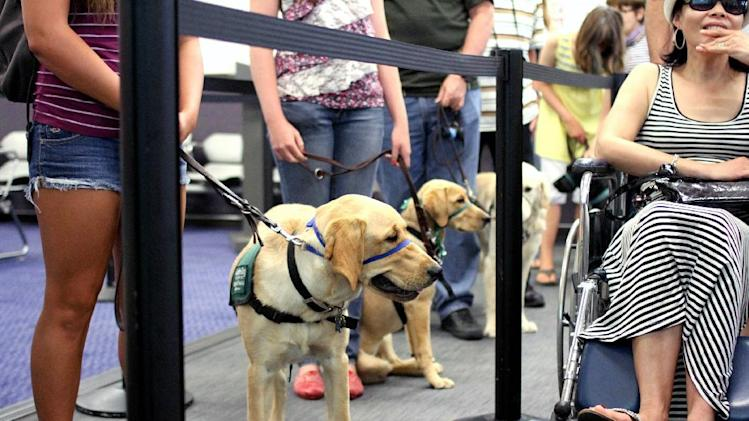 In this July 14, 2012, photo, provided by Air Hollywood, members and volunteers from Guide Dogs for the Blind (GDB) take a K9 flight class, as they experience airport distractions during a simulated airport security check in at the K9 school in Los Angeles. The idea was the brainchild of Talaat Captan, president and CEO of Air Hollywood, the world's largest aviation-themed film studio, who noticed a dog owner having a rough go getting a dog through airport security. (AP Photo/Air Hollywood, Matt Souder)