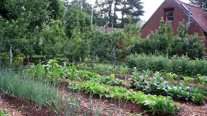 This undated photo shows beds in a weedless vegetable garden in New Paltz, New York. (AP Photo/Lee Reich)