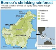 Graphic showing projected loss of forest cover to 2020 on the Indonesia and Malaysian island of Borneo