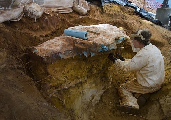 Dinosaur Footprints Lifted from NASA's Backyard