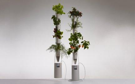 Grow a hydroponic window garden