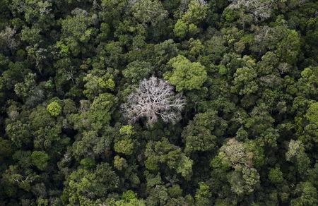 Brazil on right track for reducing deforestation rates: study