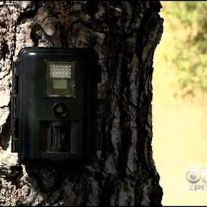 Motion-Sensing Wildlife Camera Network Program Planned For Marin County