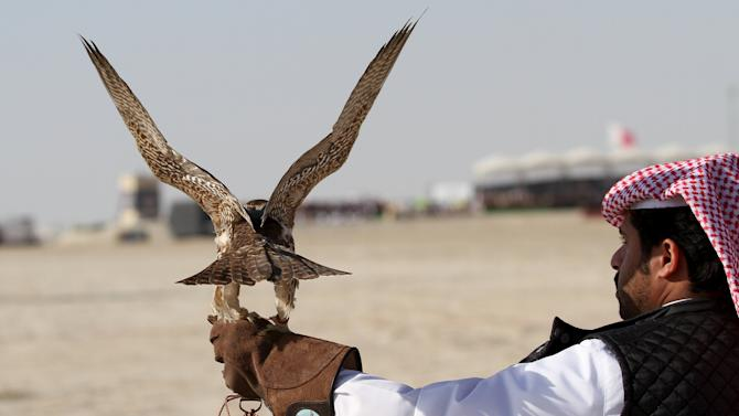 Qatari man prepares to release his falcon during a falcon contest at Qatar International Falcons and Hunting Festival at Sealine desert