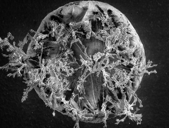 Intricate Salt Grain Wins 'Science as Art' Competition
