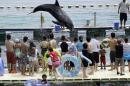 "FILE - In this photo Aug. 15, 2010 file photo, Shiro, a Risso's dolphin, jumps in front of holidaymakers in a small ocean cove in Taiji, Wakayama Prefecture (state), western Japan. Japan's aquariums promised Wednesday, May 20, 2015 to stop acquiring dolphins captured in a bloody hunt in Taiji that was depicted in the Oscar-winning documentary ""The Cove"" and has caused global outrage. (AP Photo/Koji Sasahara, File)"
