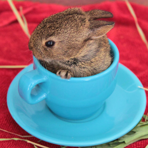 8. Tiny Bunneh Stole Your Tea
