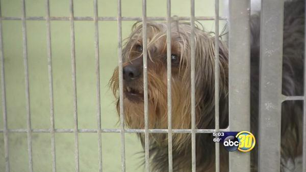Petition drive to be launched for new Fresno Co. animal shelter