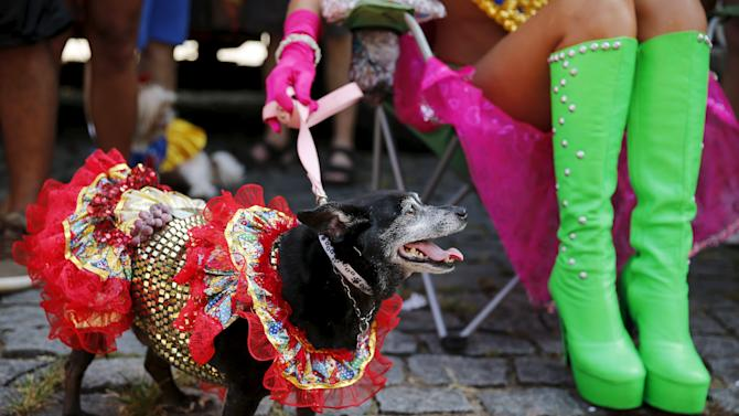 """A carnival reveller and her dog take part in the """"Blocao"""" or dog carnival parade during carnival festivities in Rio de Janeiro"""