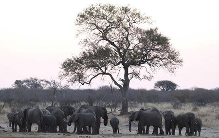 U.S. says regional trade pacts to curb poaching in Africa