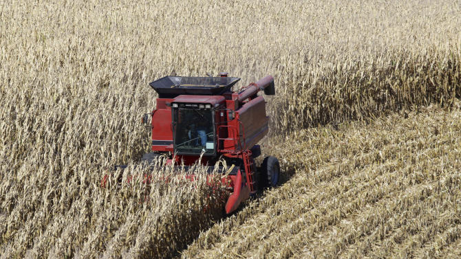 Corn harvest above expectations due to weather