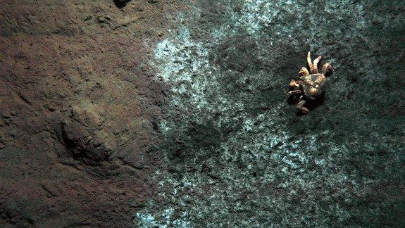Bacteria-Eating Crabs Call Seafloor Mud Volcano Home