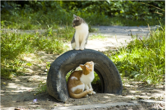 Cats Climbing on a Tire