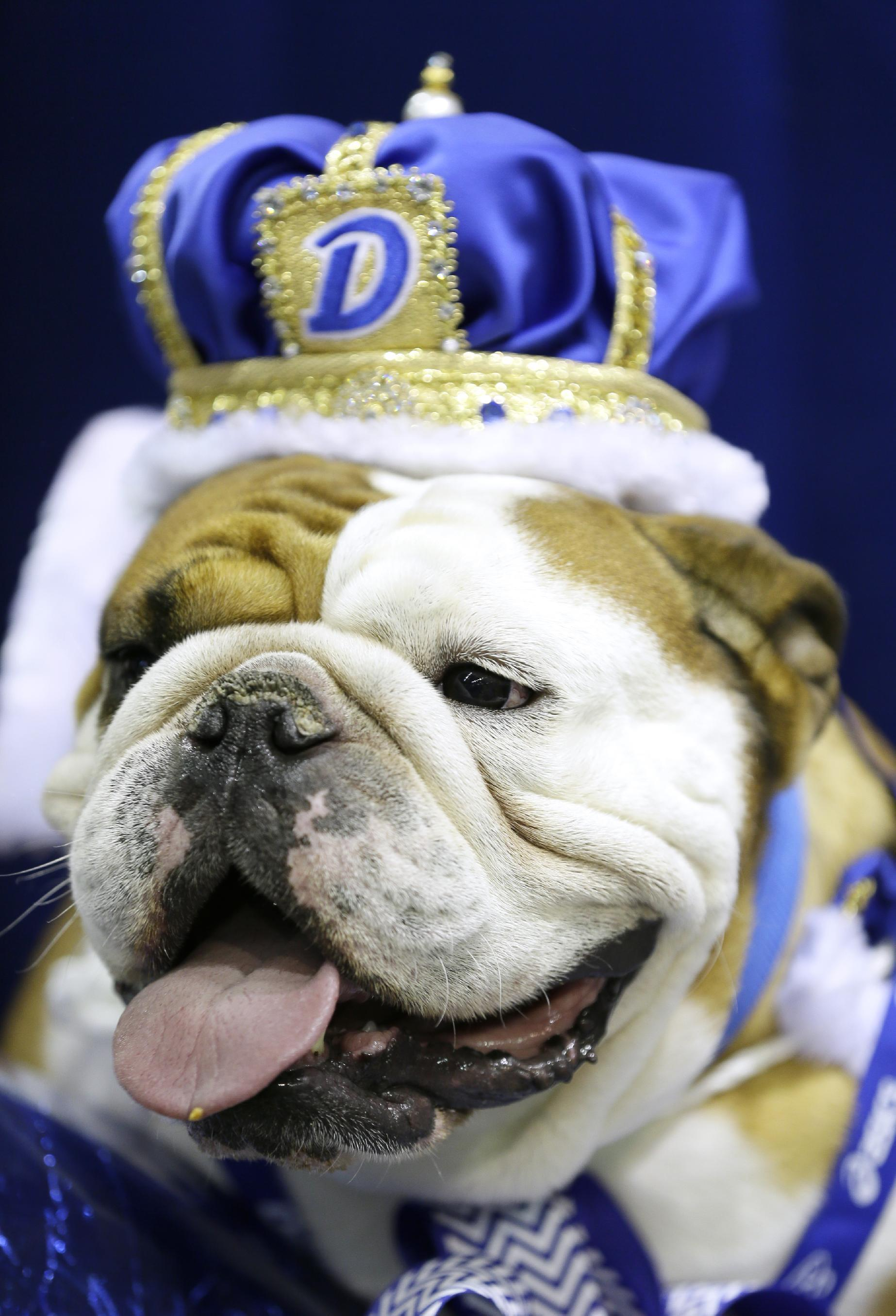 "Tank named ""Beautiful Bulldog"" in Iowa contest"
