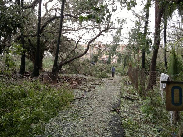 Uprooted trees litter the JIPMER campus