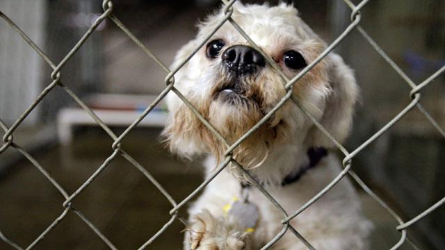 Cleveland Women Can Decide If They Want Alleged Captor's Dogs
