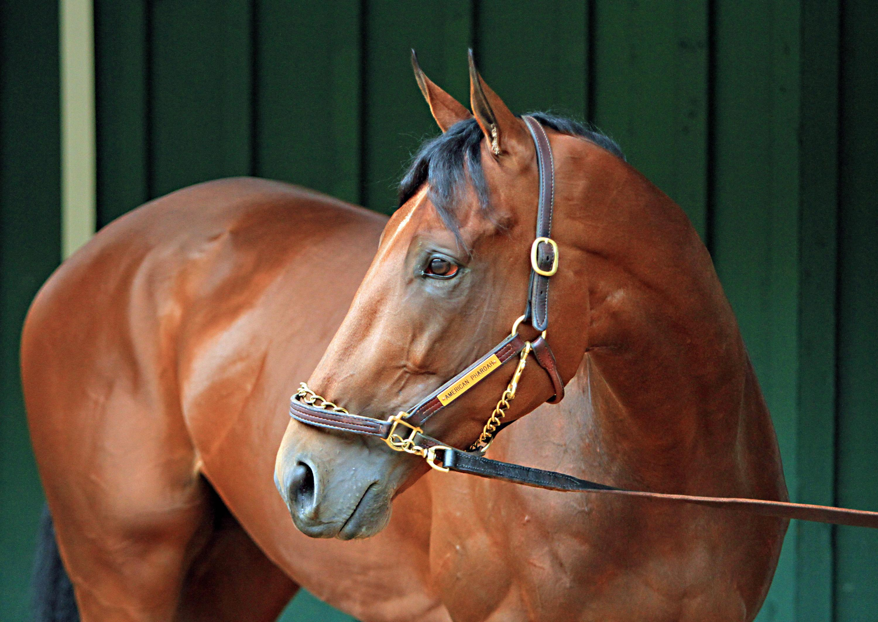 Owner: American Pharoah expected to race until end of year