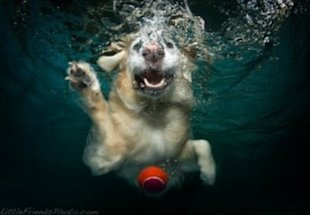 You should never just assume your dog can swim.