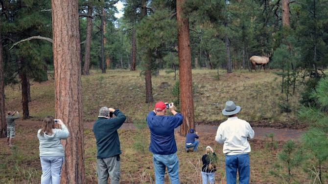 This Oct. 19, 2010 photo released by Grand Canyon National Park showing park tourists photographing a park elk on the South Rim of the Grand Canyon in Arizona. People living at and visiting the Grand Canyon decades ago never encountered elk that now regularly create traffic jams, graze on the school's recreational field and hotel lawns and aren't too shy to display their power. (AP Photo/Michael Quinn, Grand Canyon National Park)