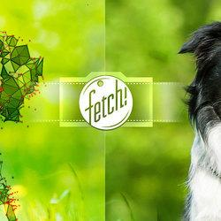 "Microsoft's New App ""Fetch!"" Tells You What Kind Of Dog You Are (And It Can ID Your Dog, Too)"