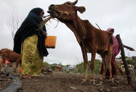 Scientists predict drier Horn of Africa as climate warms