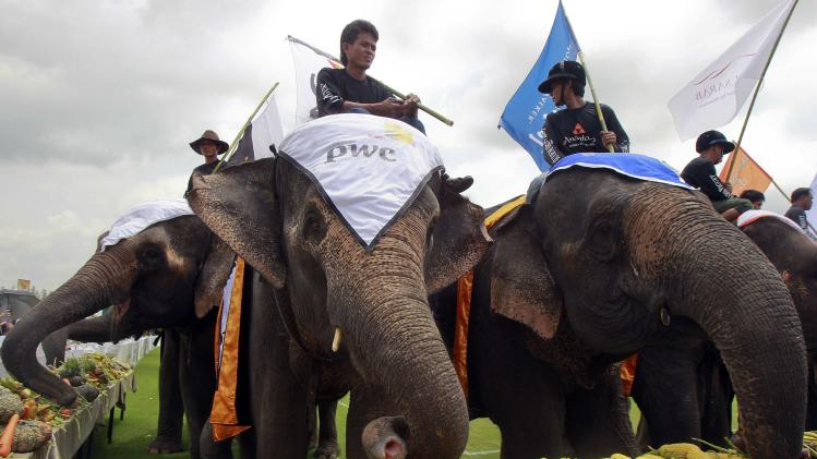 Elephants eat a buffet of fruit and vegetables during the 2014 King's Cup Elephant Polo Tournament in Samut Prakan province