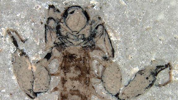 Jurassic Insects Wrongly Accused of Sucking Dino Blood