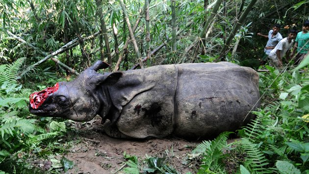 Shocking Photos: Poachers chop Rhinos horns