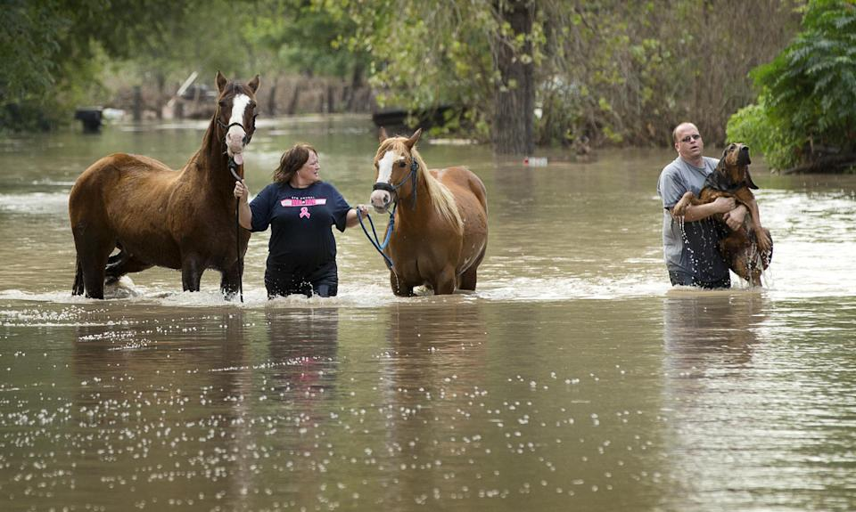 Rhonda Burnett walks her horses through flood waters while Lee Hays helps a neighbor's dog in Garfield, Texas, Saturday Oct. 31, 2015.  Another...