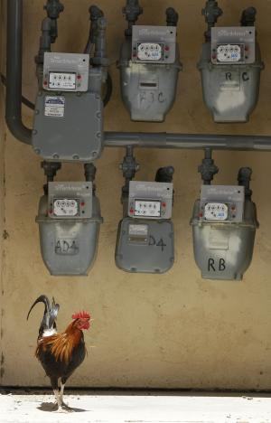 FILE - In this June 29, 2011 file photo, a chicken is shown under PG&E SmartMeters in San Juan Bautista, Calif. The California Public Utilities Commission considers a Pacific Gas & Electric Co. proposal Wednesday to levy charges against customers who opt out of $2.2 billion SmartMeter program that has triggered protests in several Northern California communities. (AP Photo/Jeff Chiu, File)