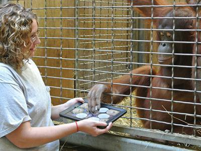 'Apps for Apes,' Orangutans Use IPads