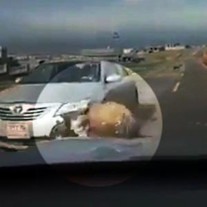 Car gets smashed driving through a ram fight