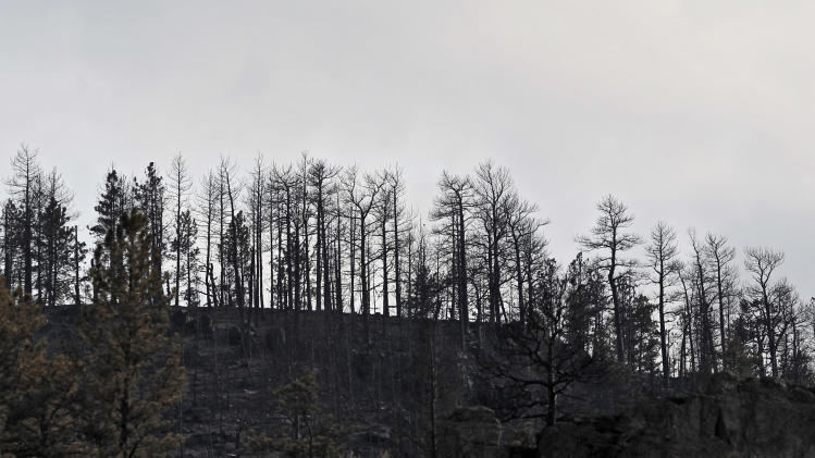 Burned trees stand on the south side of Poudre Canyon where the High Park wildfire devastated the west of Fort Collins, Colo., on Wednesday, June 20, 2012. The largest Colorado blaze west of Fort Collins was 55 percent contained and has destroyed at least 189 homes since it was sparked by lightning June 9.  (AP Photo/Ed Andrieski)