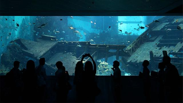 World's Largest Aquarium Opens