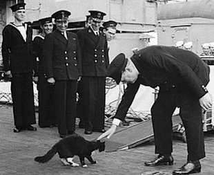 Blackie the cat meets Churchill aboard her homestead, the HMS Prince of Wales.