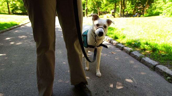 How to Train a Service Dog