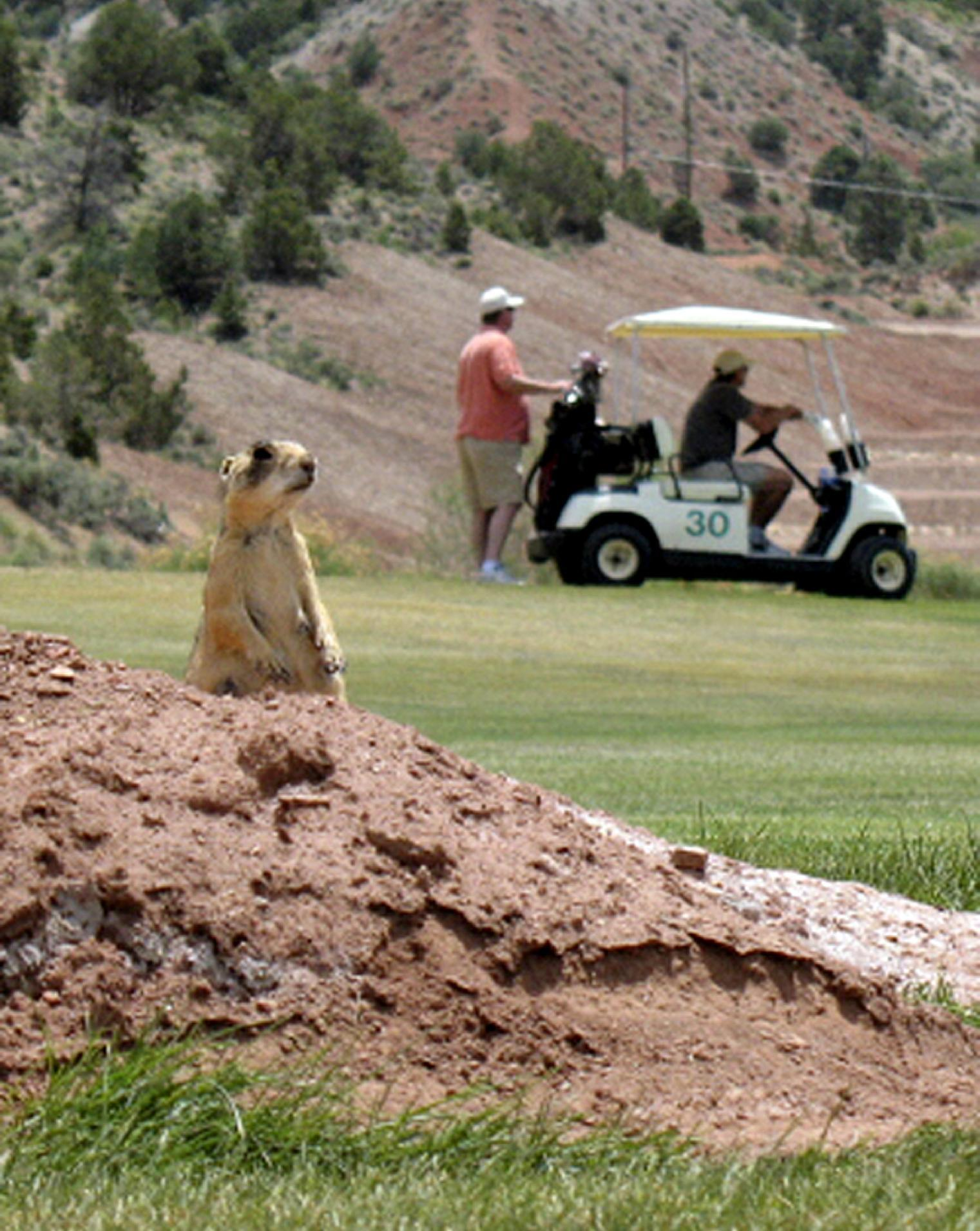 9 states back Utah ruling tossing federal prairie dog rules